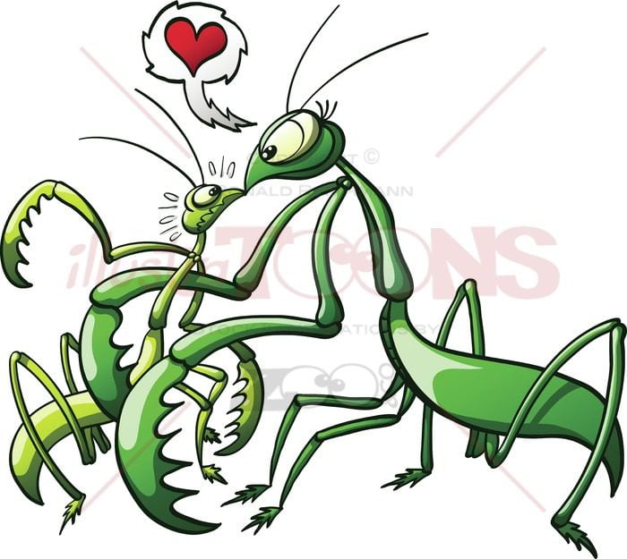 Praying-mantis-forcing-her-mate-to-love