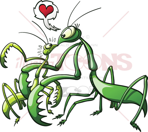 Praying mantis forcing her mate to love