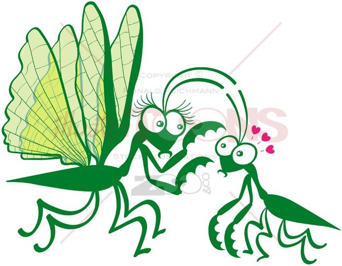 Couple of praying mantises dangerously falling in love - illustratoons