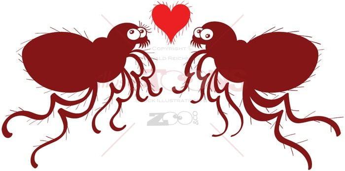 Couple of ugly fleas madly falling in love - illustratoons