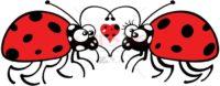 Cute ladybugs tenderly falling in love - illustratoons