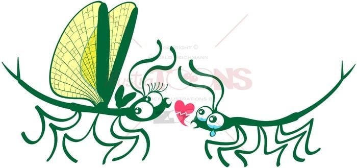 Stick insects' painful declaration of love - illustratoons