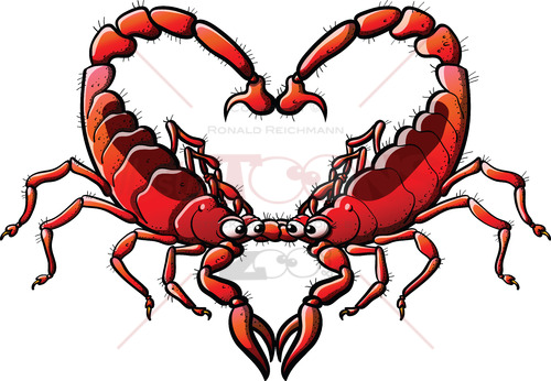Couple of scorpions in love forming a heart - illustratoons