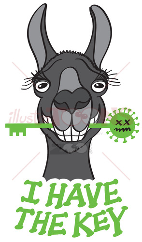 Black llama has the key against Coronavirus - illustratoons