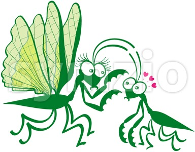 Couple of praying mantises dangerously falling in love Stock Vector